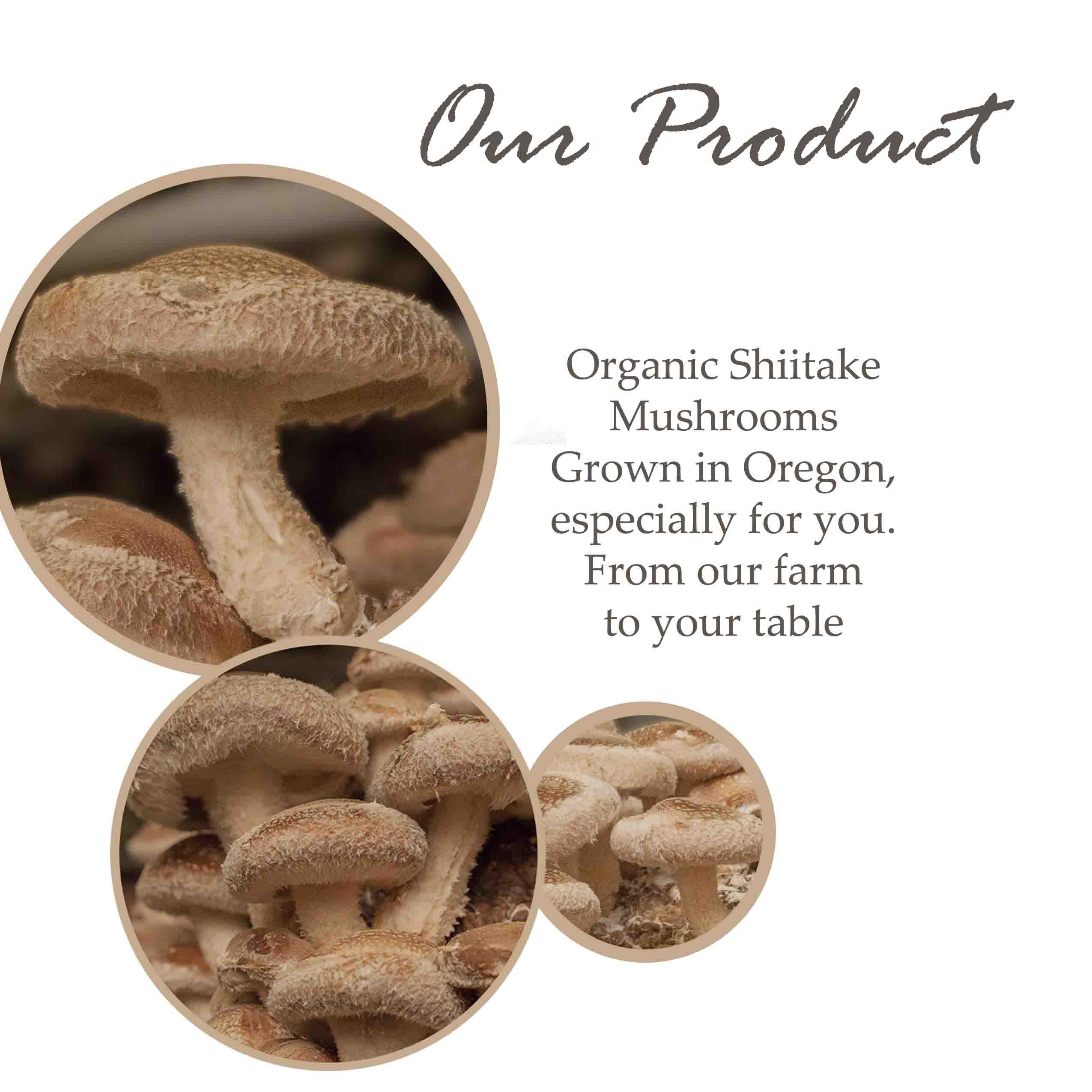 organic shiitake mushrooms oregon